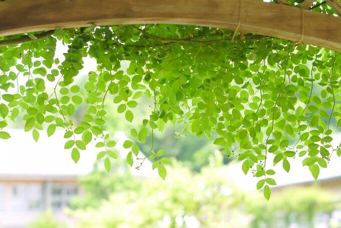 名古屋で緑豊かな結婚式場を体験できるブライダルフェア3選